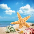 Sea star and colorful shells — Stock Photo