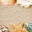 Marine frame with colorful sea shells — Stock Photo #24517169