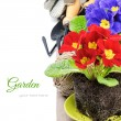 Colorful primrose flowers and garden tools — Stock Photo