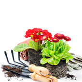 Red flowers with garden tools — Stock Photo