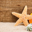 Sea star and shells - Stock Photo