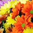 Multicolor gerber flowers — Stock Photo