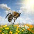 Bee flying over colorful flower field - Stock Photo
