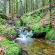 Forest stream at autumn day - Stock Photo