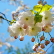 Spring blossom background - Stockfoto