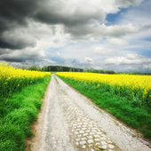 Country road with rapeseed field — Stock Photo