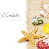 Coloridas conchas en la arena — Foto de Stock