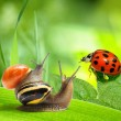 Two snails and ladybug looking at green background — Stok fotoğraf