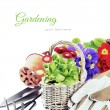 colorful flowers and garden tools — Stock Photo