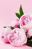 Pink peonies on pastel background — Stock Photo