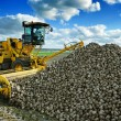 Agricultural vehicle harvesting sugar beets — Stock Photo