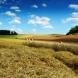 Landscape with straw bales at harvested field — Stock Photo