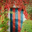 colorful rustic door covered by lianas — Stock Photo