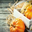 Autumn harvest setting with pumpkins — Stock Photo #34348335