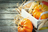 Autumn harvest setting with pumpkins — Stock Photo