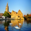 white swans in bruges canal — Stock Photo