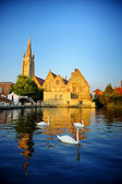 White swans in Bruges canal — Foto de Stock
