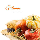 Various pumpkins and straw hat — Stock Photo