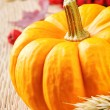 Pumpkin in autumn setting — Stock Photo