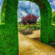 Bush arch in beautiful summer garden — Stock Photo
