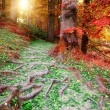 Beautiful autumn forest landscape — Stock Photo