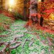 Stock Photo: Beautiful autumn forest landscape