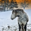 Foto Stock: Horse at winter sunset