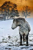 Horse at winter sunset — Stockfoto