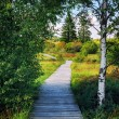 Summer landscape with wooden pathway — Stock Photo