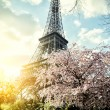 Springtime in Paris. Eiffel tower — Stock Photo #39227995