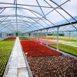 Greenhouse for flower growing — Stock Photo #39228071