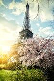 Springtime in Paris. Eiffel tower — Stock Photo