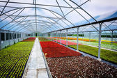 Greenhouse for flower growing — Stock Photo