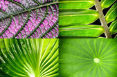 Tropical leaves — Stock Photo