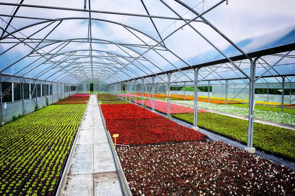 Efecto invernadero para el cultivo de flores foto de Plantas de invernadero