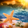 Sea star and colorful shells — Stock Photo #40271647