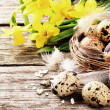 Easter setting with quail eggs and yellow daffodils — Stock Photo #41543113