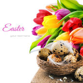 Easter setting with quail eggs and tulips — Stock Photo