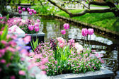 Beautiful flowers in Keukenhof Gardens — Stock Photo