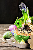 Easter setting with hyacinth — Stock Photo