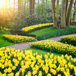Spring landscape with yellow daffodils. — Stock Photo #44323031