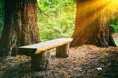 Wood bench in the summer forest — Stock Photo