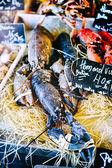 Fresh lobsters at fish market — Stock Photo
