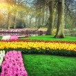 Spring landscape with colorful flowers — Stock Photo #45807407
