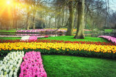 Spring landscape with colorful flowers — Stock Photo