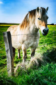 Young horse at green field — Stock Photo