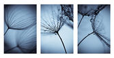 Collage with photos of dandelions. artistic photos of dandelions — Stock Photo