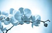 цветы орхидеи, изолированные на белом фоне. — Стоковое фото