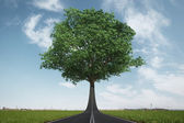 The road turns into a tree. Ecology concept — Stock Photo