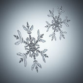 Two snowflakes — Stock Photo